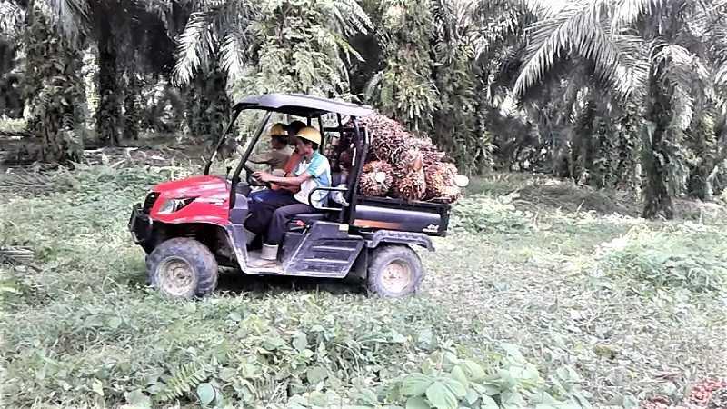 Mechron sangat popular sebagai alat angkut tandan buah segar di lingkungan perkebunan kelapa sawit.